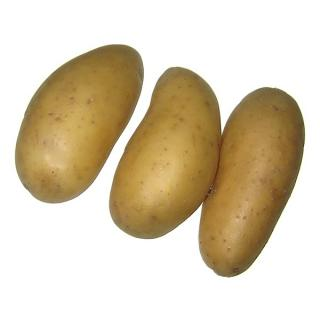 Frühkartoffeln  vfk. Anuschka