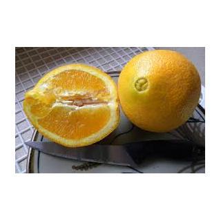 Orangen Washington Navel