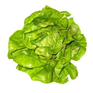 Salat Kopfsalat, grün